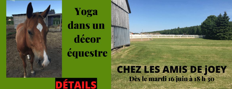 Cours de yoga thérapeutique/méditation dans un décor équestre-1